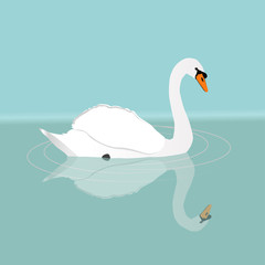 A white swan swimming in the water