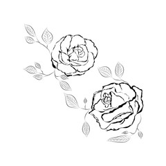 Rose flower isolated outline hand drawn. Stock line vector illustration.