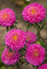 Colorful photos of garden flowers