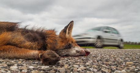 Closeup aus der Froschperspektive Wildunfall toter Fuchs liegt auf der Straße und Auto rast vorbei