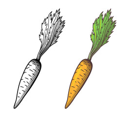 Vector stylized illustration of carrot, outline and colored version. Isolated on white