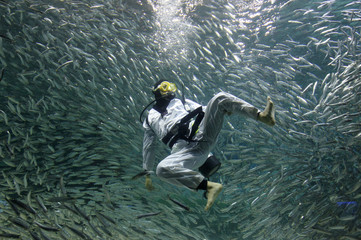 A diver surrounded by sardines performs Taekwondo during a promotional diving performance for summer vacation visitors at the Coex Aquarium in Seoul
