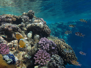 Coral Reef Garden