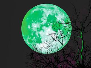 Emerald super moon in dark sky over dead tree