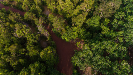 Aerial view of mangrove forest and river