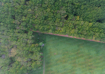 Aerial Para Rubber Tree, Rubber Plantation, and local road