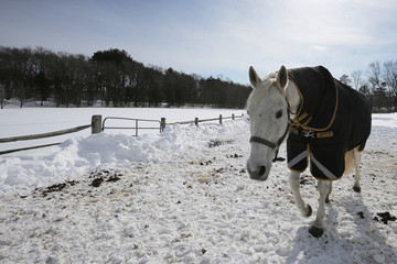 A horse stands on a snow covered paddock in Ipswich