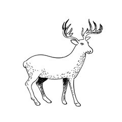 Hand drawn doodle deer on white background. Vector sketch illustration
