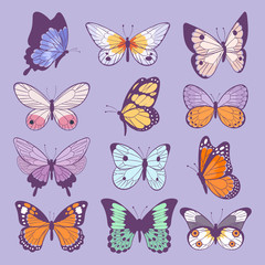 Colorful different summer colorfullbutterfly wings vector top view illustration isolated on background.