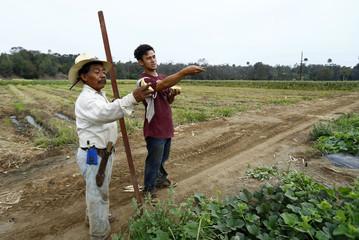 Makoto Chino organises the morning harvest on his family's farm in Rancho Santa Fe, California