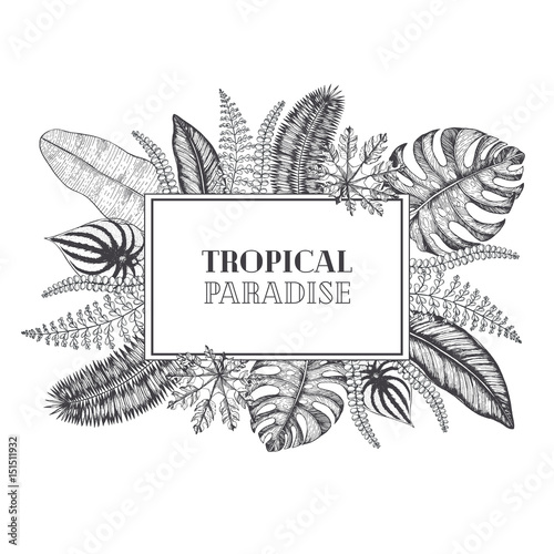 Tropical palm leaves design template vector illustration leaves of tropical palm leaves design template vector illustration leaves of palm wedding invitation vintage card stopboris Image collections