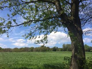 Naturlandschaft im Frühling