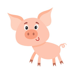Funny little smiling pig with swirling tail, cartoon vector illustration isolated on white background. Cute little pig standing on four legs and smiling shyly, decoration element