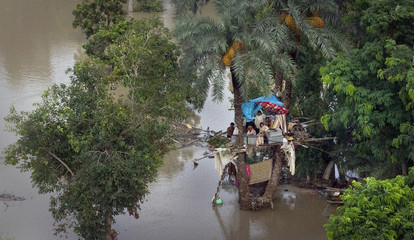 A family takes refuge from flood waters in date trees in Muzaffargarh district of Pakistan's Punjab province