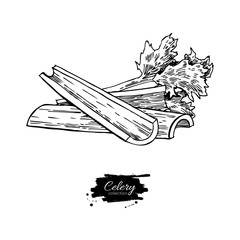 Celery stick hand drawn vector illustration. Isolated Vegetable engraved style object. Detailed vegetarian food drawing