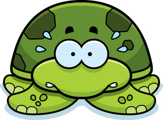 Nervous Little Sea Turtle