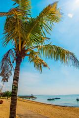 Benoa sand beach view, palm tree. Bali,Indonesia