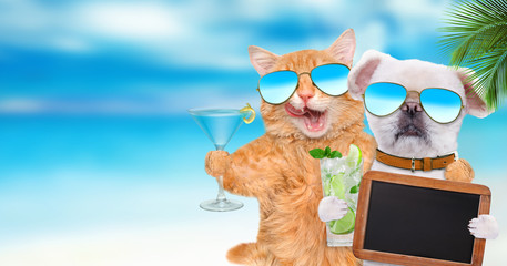 Cat  and dog wearing sunglasses relaxing in the sea background. Cat  and dog holds blank blackboard .