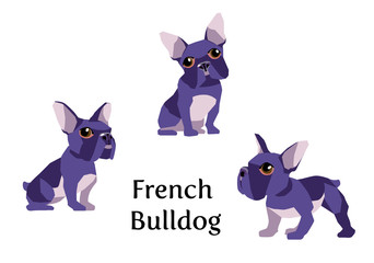 Vector illustration of French Bulldog in different poses isolated on white background.