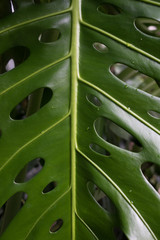 Tropische Pflanzenvielfalt Hintergrundbild für Tropisches Lebensgefühl