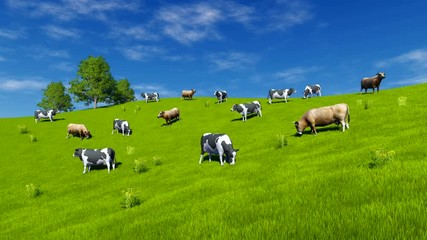 Wall Mural - Herd of mottled dairy cows graze on the open meadow covered with fresh green grass at spring day. Tilt up shot. Realistic 3D animation rendered in 4K