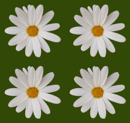 Abstract Daisy Scene