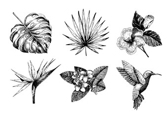 Vecotr hand drawn tropical plant icons. Exotic engraved leaves and flowers. Monstera, livistona palm leaves, bird of paradise, plumeria, hibiscus, hummingbird.