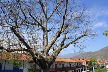 Ceiba sin hojas.