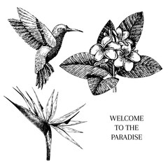 Vecotr hand drawn tropical plant icons. Exotic engraved leaves and flowers. Isoalated on white. bird of paradise, plumeria, hummingbird.