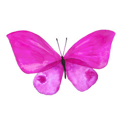 Drawing a watercolor pink butterfly