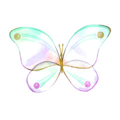 Watercolor color butterfly drawing