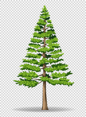 Pine tree on transparent background