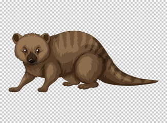 Australian wild animal on transparent background