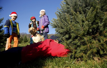 Furgal children supervise the cutting down of the family tree by their father Kevin at the Snickers Gap Christmas Tree Farm in Round Hill in Virginia
