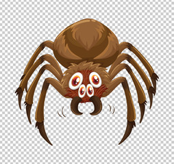 Wild spider on transparent background