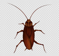 Brown cockroach on transparent background