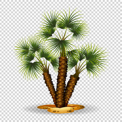 Gardening theme wtih palm tree