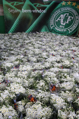 Flowers are seen near the Brazilian soccer team Chapecoense logo, in tribute to Chapecoense's players who died in a plane crash in the Colombian jungle, at the Arena Conda stadium in Chapeco