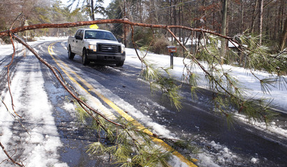 A truck drives around a downed small pine tree in Decatur
