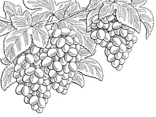 Grapes fruit graphic branch black white sketch illustration vector