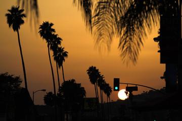 Palm trees are silhouetted at sunset in Los Angeles