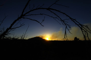 A tree branch is silhouetted as smoke rises from the Doce Fire in Yavapai County