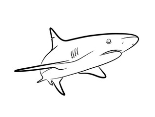 Shark Line Art, a hand drawn vector Cartoon Illustration of a shark