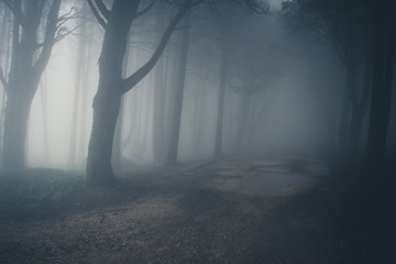 Mysterious dark old forest with fog in the Sintra mountains in Portugal