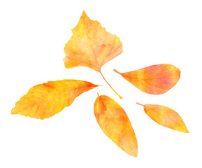 Set of golden watercolor leaves on white background