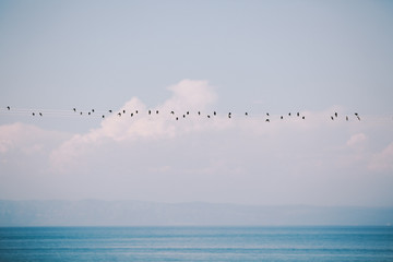 Birds by the sea