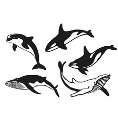Set of five black  logo silhouettes of whale and dolphin, illustration isolated on white background, vector image of animals, Marine mammals from the order of cetaceans