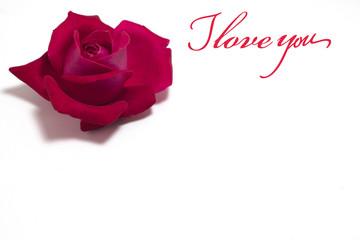 bocciolo di rosa festa della mamma