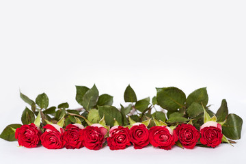 Photo background with roses