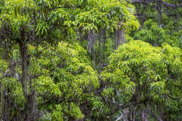 Lush green tropical Brazilian jungle rainforest background